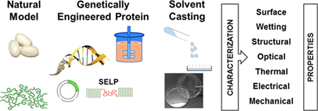 10-Exploring the properties of genetically engineered silk-elastin-like protein films